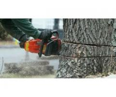 Get Tree Cutting Services in Toronto