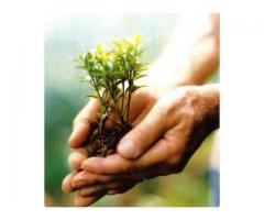 Seed Manufacturers Companies in India
