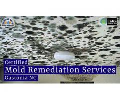 Certified Mold Remediation Services in Gastonia NC