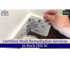 Certified Mold Remediation Services in Rock Hill SC